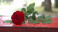 Beautiful red rose on wet swing in the park after rain, close up, sign of love. - stock footage