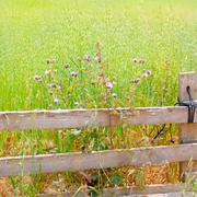 Balearic green meadow in formentera and wood fence Stock Photos