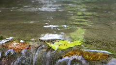 Stock Video Footage of waterfall with autumn leaves