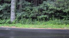 Shenandoah Bear Stock Footage