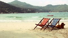 Couple Sun Loungers With Dog Ocean View - stock footage