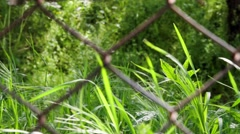 grass-behind-wire - stock footage