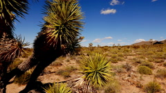 Cactus and joshua trees in Arizona . Stock Footage
