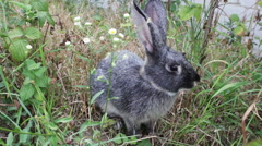 Bunny Sitting In The Bushes 4 Stock Footage