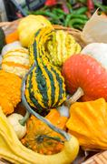 Gourds group - greengrocer  food products Stock Photos