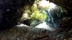 Trout hidden at the bottom of a river Stock Footage