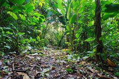 Jungle footpath through lush tropical vegetation Stock Photos