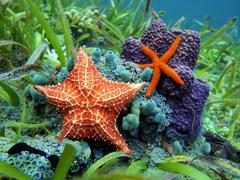 Starfish underwater over colorful marine life Stock Photos