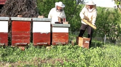 Work in apiary Stock Footage