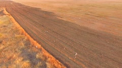Aerial View Of Stubble Field Stock Footage