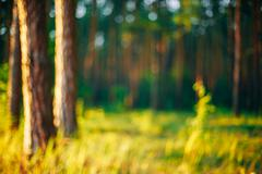 Nature Green Blurred Background Of Out Of Focus Forest Or Bokeh - stock photo
