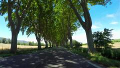 FPV: Driving through beautiful tree avenue in sunny spring - stock footage