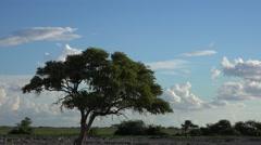 Namibian Savannah (4K footage) Stock Footage