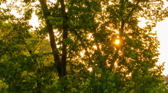 Sun shine thorugh the tree leaves - stock footage