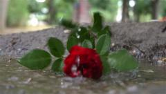 Rain drops falling in the puddle, man throws red rose and go away, slow motion. Stock Footage