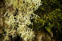 Lichen and moss Stock Photos
