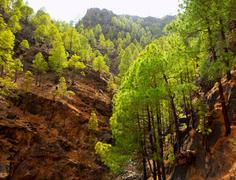 Gran Canaria Canary pine mountains - stock photo