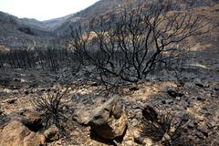 Stock Photo of Black ashes of canary pine after forest fire at Teide
