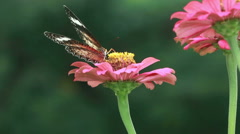 HD footage close up butterfly with red flower in nature background - stock footage