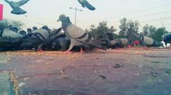 flock of pigeons feeding - stock footage