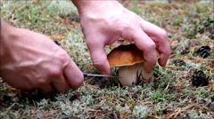 Mushrooming cepe in fall Stock Footage