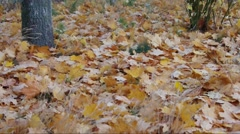 Foliage rustle in autumn forest Stock Footage