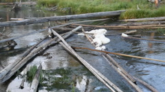 Logjam in the Gibbon River at Yellowstone National Park Stock Footage