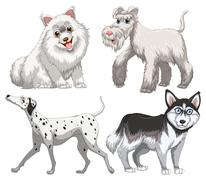 Different kind of canine Stock Illustration