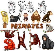 Different kind of primates Stock Illustration