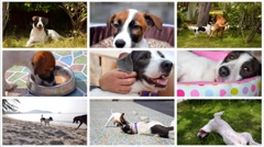 Collage Funny and Cute Dogs Stock Footage