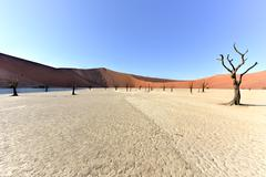 Dead Vlei, Namibia - stock photo