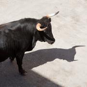running of the bulls at street fest in Spain - stock photo