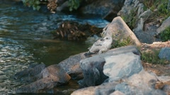 Nestling gulls sitting on the rocks by the river - stock footage
