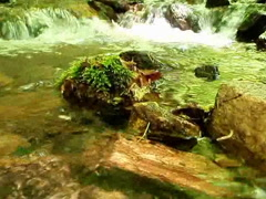 Small creek in forest - stock footage