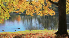 River, in the park, October sunny day Stock Footage