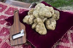 White truffles from Piedmont - stock photo