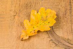 Autumnal leaves on wood background Stock Photos