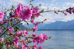 Flowers against mountains and lake Geneva - stock photo