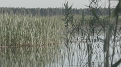Overgrown lake with reeds and cattails Stock Footage