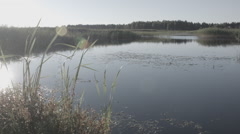 Wide angle paning shot of an overgrown lake in morning Stock Footage