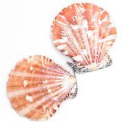 Atlantic Calico Scallop Shell (Argopecten Gibbus) - stock photo