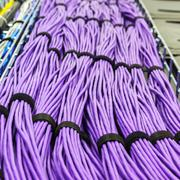Large group of lilac utp cables - stock photo