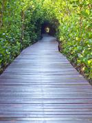 Underpass of trees Stock Photos