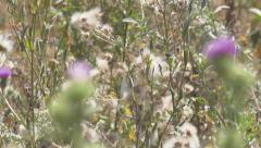 Wild flowers   thistle Stock Footage