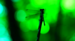Stock Video Footage of Dragonfly aerobics