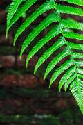 Fern Leaves with Water Droplets Stock Photos