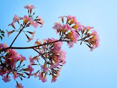 Pink sweet dream feeling - stock photo