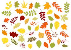 Autumnal leaves, herbs, seeds and berries Stock Illustration