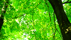 Crowns of trees in forest with bright afternoon sun and rays and sound. Stock Footage