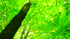 Trees in forest with bright afternoon sun and rays and sound, rotation Stock Footage